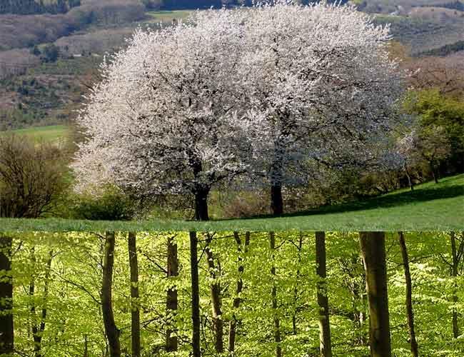 poda en altura en primavera