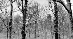poda en altura invierno
